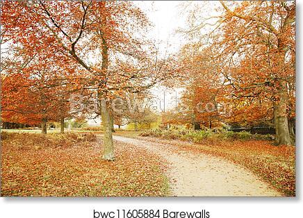 Park Art|My WordPress Blog_Download Richmond Park Tree Print  Gif