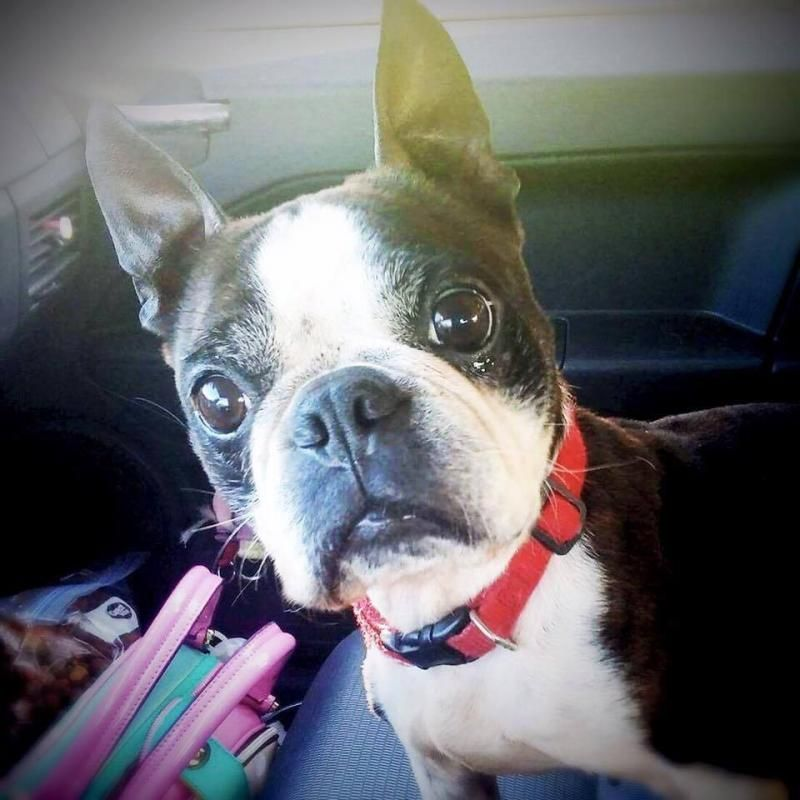 Park Art|My WordPress Blog_Boston Terrier Puppies Cleveland Ohio