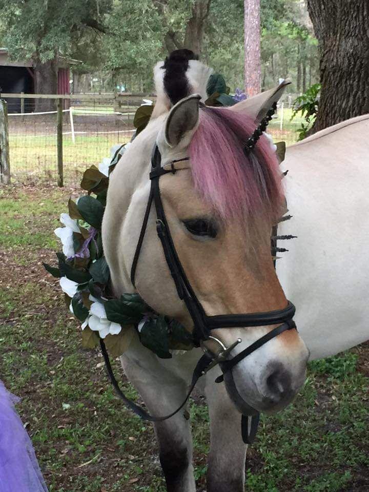 Park Art|My WordPress Blog_Pony Rides Birthday Party Jacksonville Fl