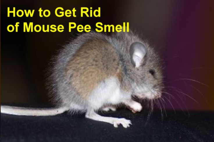 Park Art My WordPress Blog_How To Get Rid Of Mouse Urine Smell In Clothes