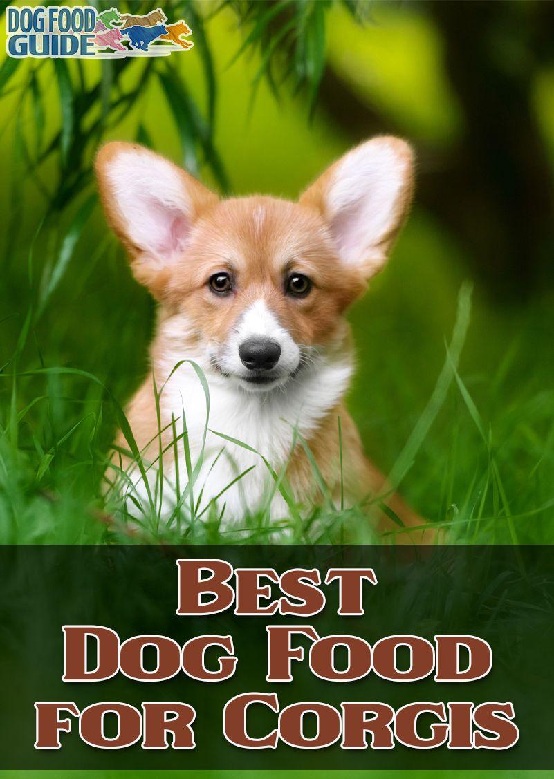 Park Art My WordPress Blog_Good Dog Food For Corgis