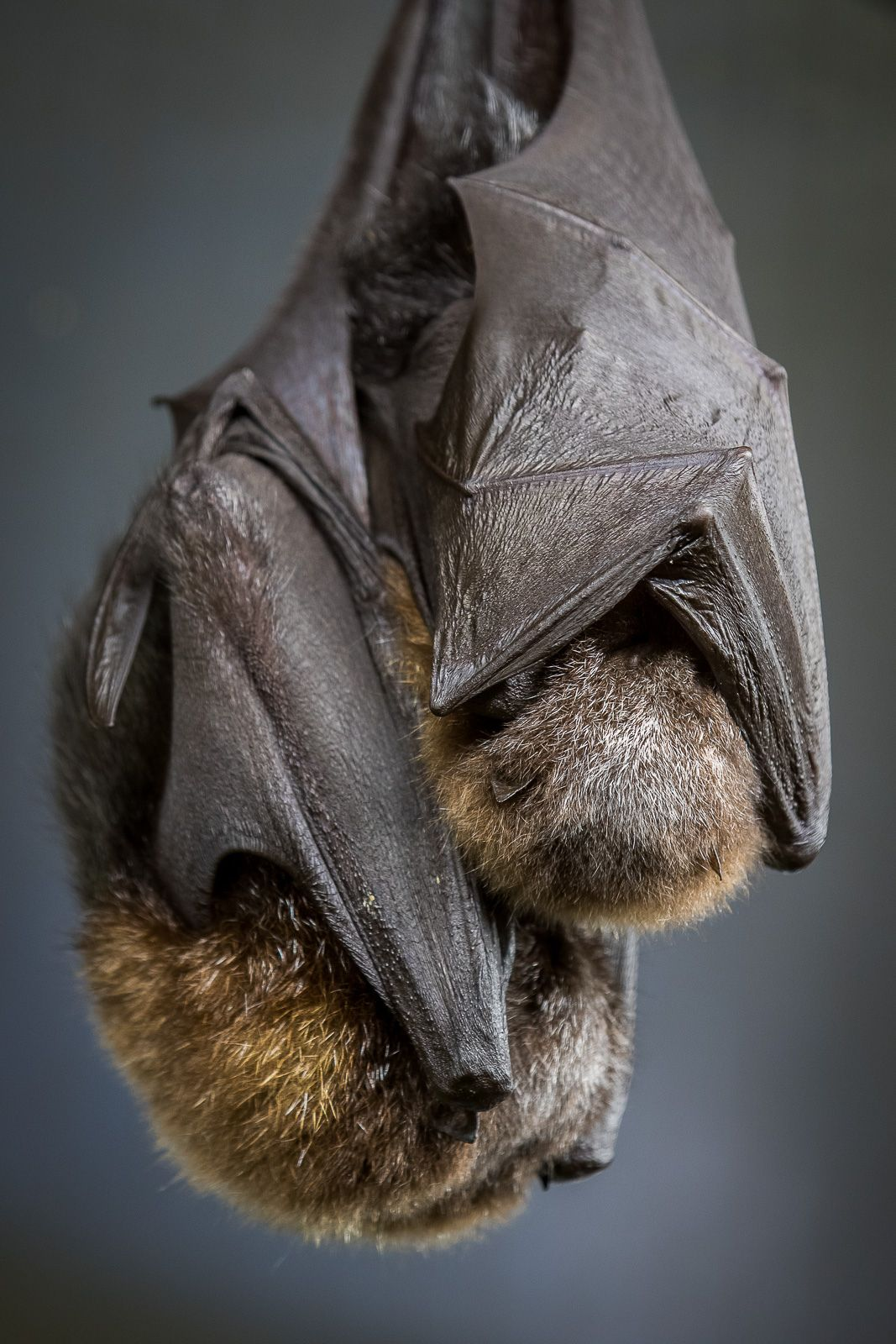 Park Art|My WordPress Blog_What Do Bats Sound Like When Flying