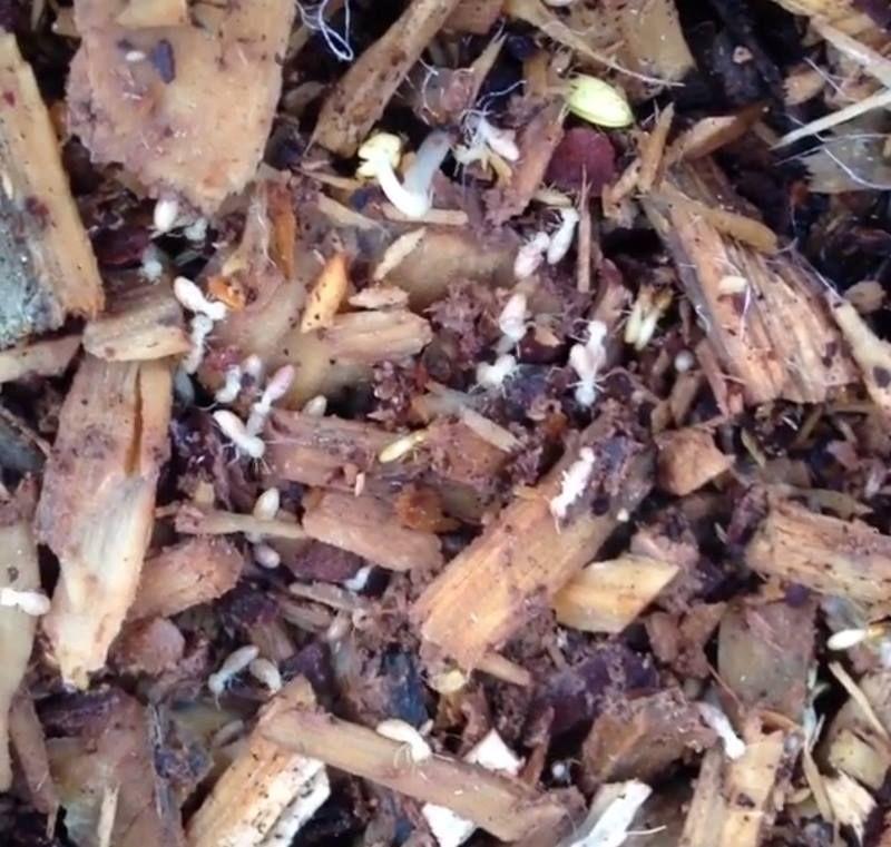 Park Art|My WordPress Blog_Do Flying Termites Make Noise