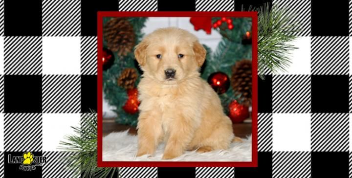 Park Art|My WordPress Blog_Pomeranian Puppies For Sale In Pa Under 300