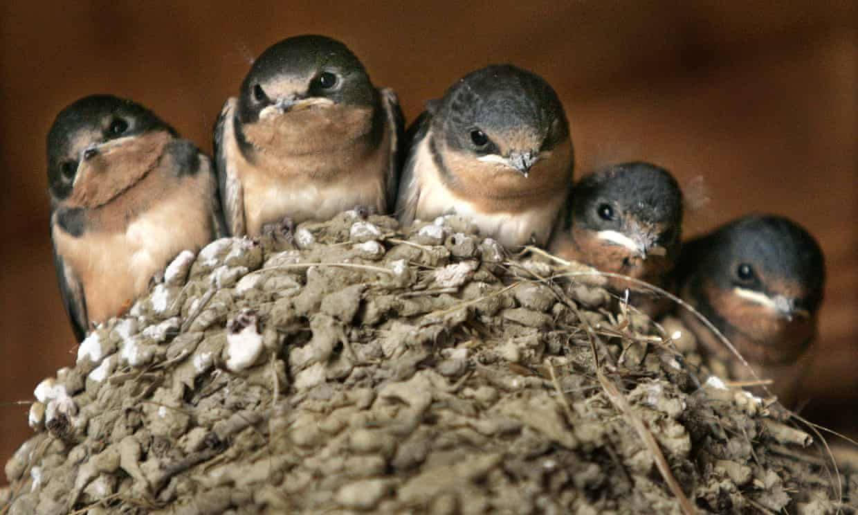 Park Art My WordPress Blog_How Do I Get Rid Of Barn Swallows