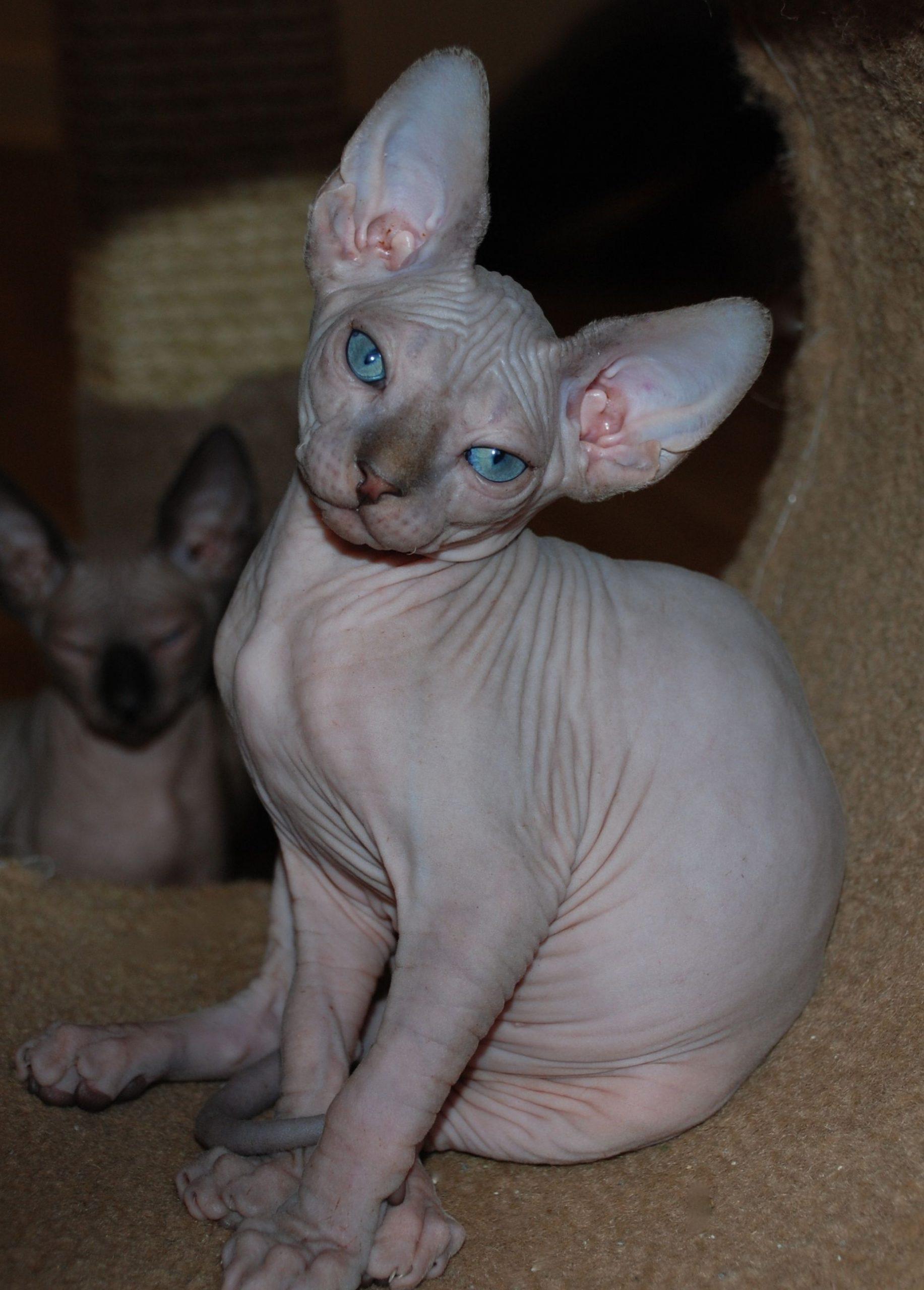 Park Art|My WordPress Blog_Sphynx Cat For Sale Central Texas