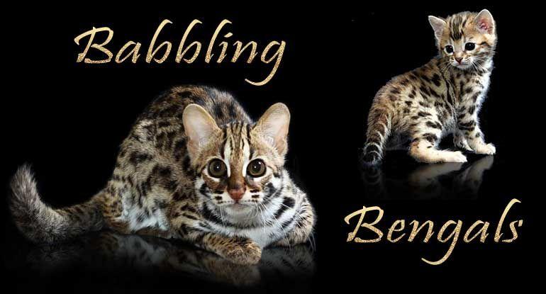 Park Art|My WordPress Blog_Egyptian Mau Kittens For Sale Ny