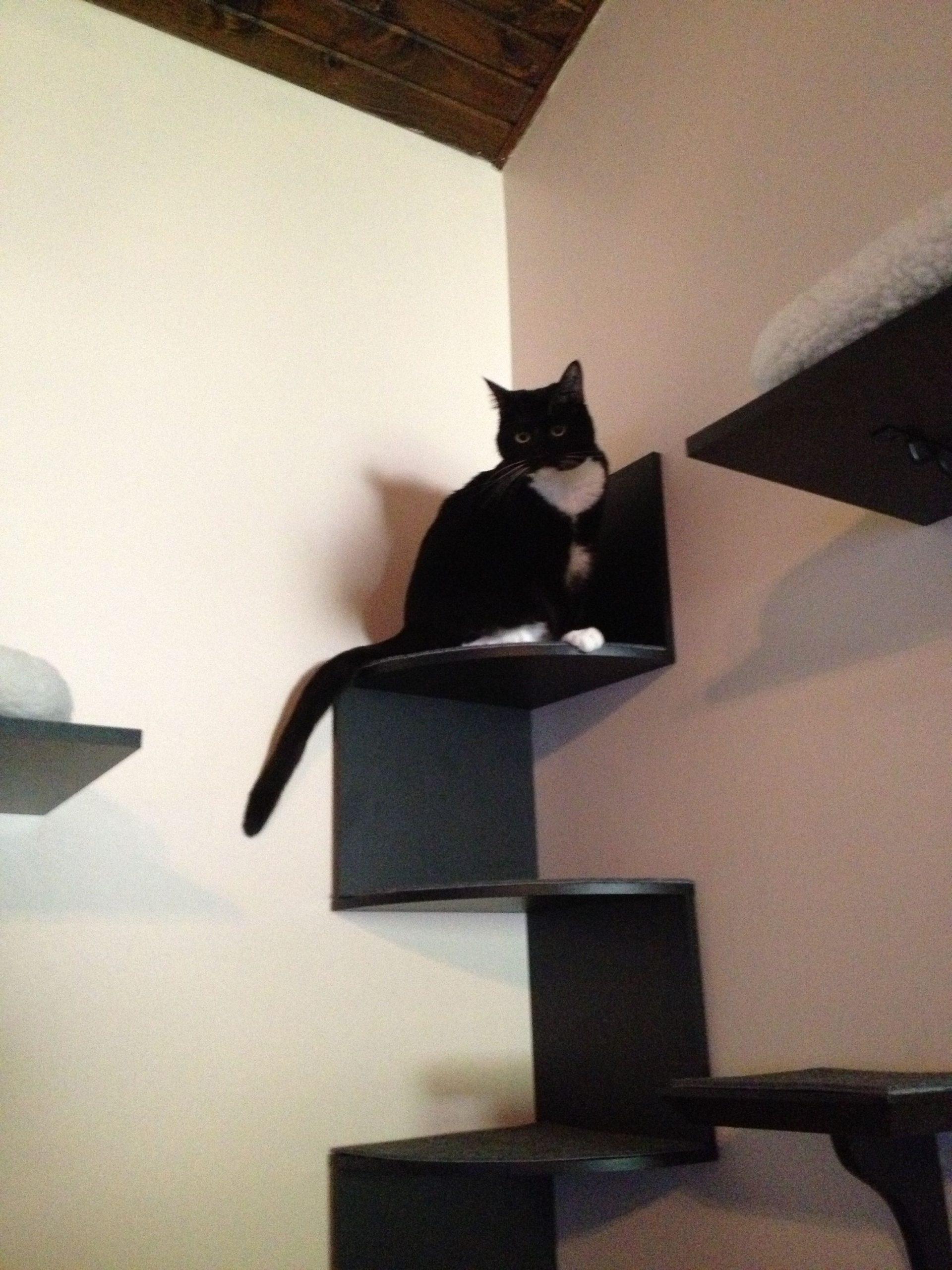 Park Art|My WordPress Blog_Cat Steps For Wall Diy