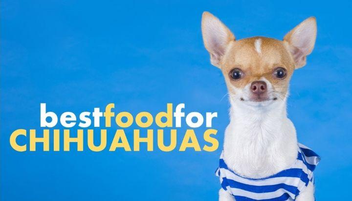 Park Art|My WordPress Blog_Best Dog Food For Shedding Chihuahua