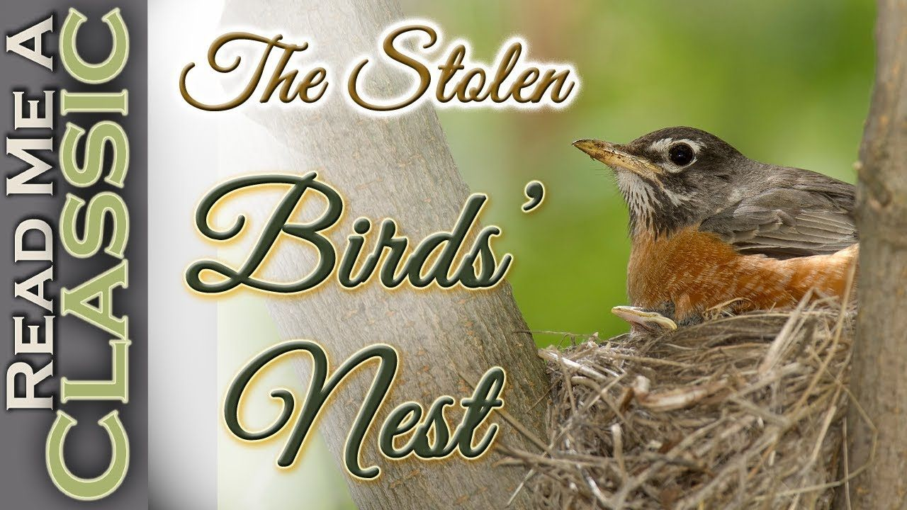 Park Art|My WordPress Blog_Childrens Books About Birds And Nests