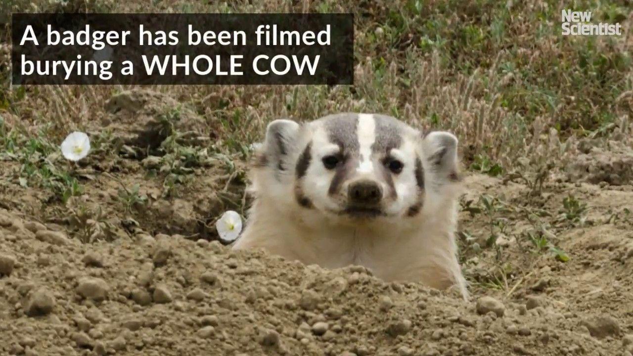Park Art|My WordPress Blog_Buy A Whole Cow Utah