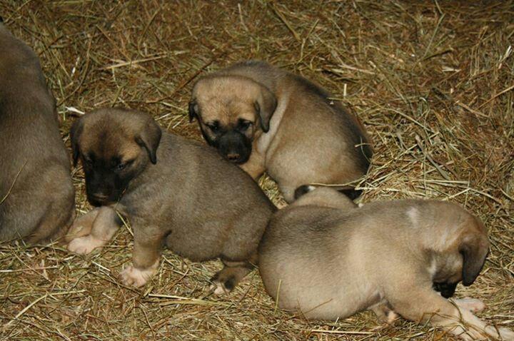 Park Art|My WordPress Blog_Kangal Puppies For Sale Uk