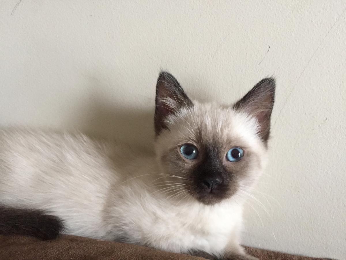 Park Art|My WordPress Blog_Ragdoll Kittens For Sale Ohio Hoobly
