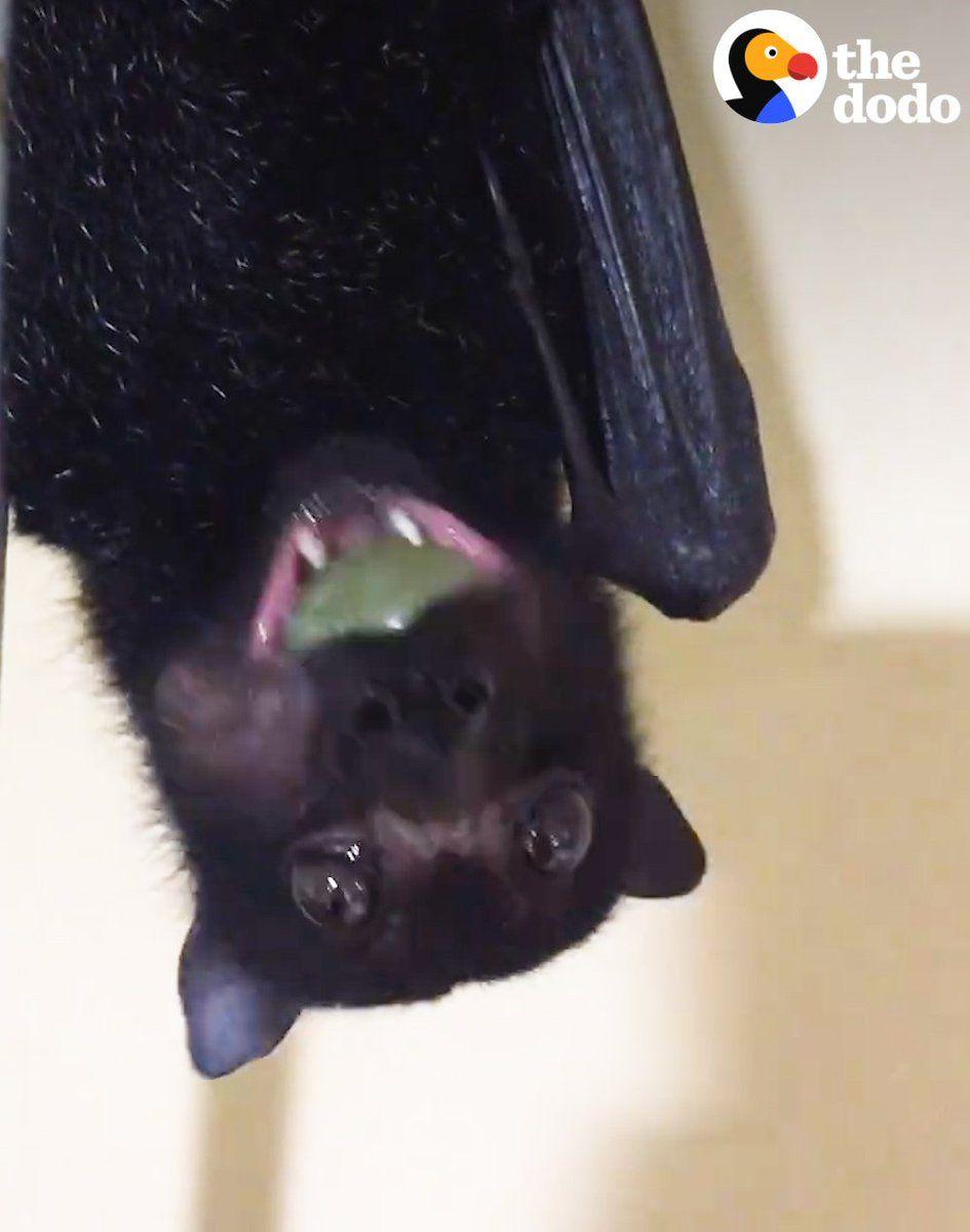 Park Art|My WordPress Blog_What Noise Does A Micro Bat Make