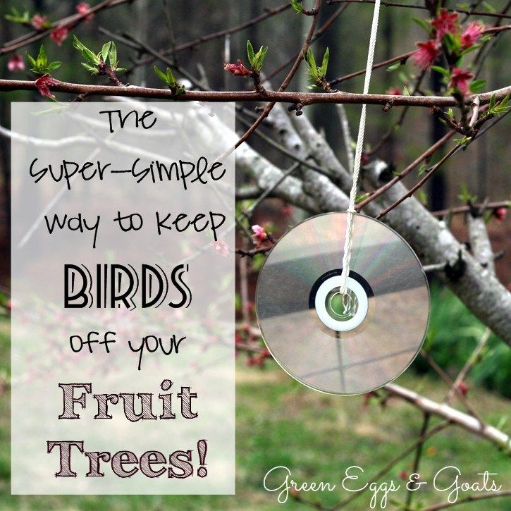 Park Art|My WordPress Blog_How To Keep Birds Out Of Fruit Trees