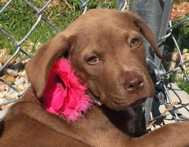 Park Art My WordPress Blog_Pitbull Puppies For Sale In Nj 2020