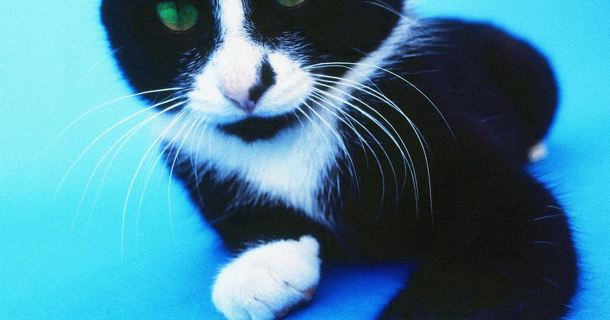 Park Art My WordPress Blog_Polydactyl Cats For Sale In Michigan