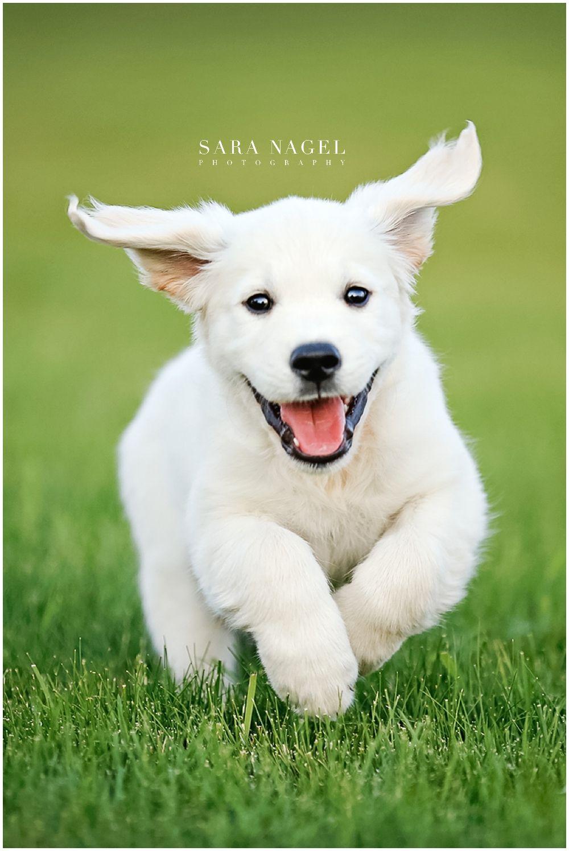 Park Art My WordPress Blog_Golden Retriever Puppies Montana For Sale