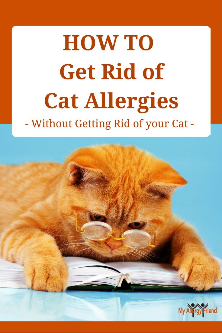 Park Art My WordPress Blog_How Much Is An Allergy Test For A Cat