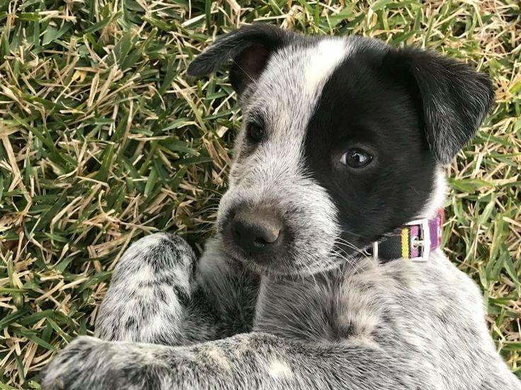 Park Art|My WordPress Blog_Texas Heeler Puppies For Sale Ohio