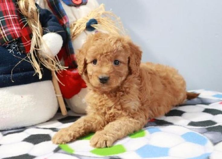 Park Art|My WordPress Blog_Where Is The Best Place To Buy A Goldendoodle
