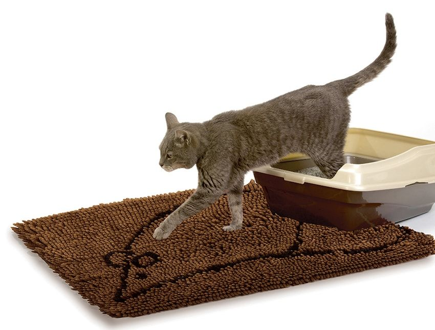 Park Art|My WordPress Blog_Cooling Mat For Cats Reviews