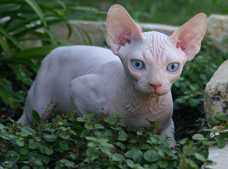 Park Art|My WordPress Blog_Sphynx Cat For Sale East Texas