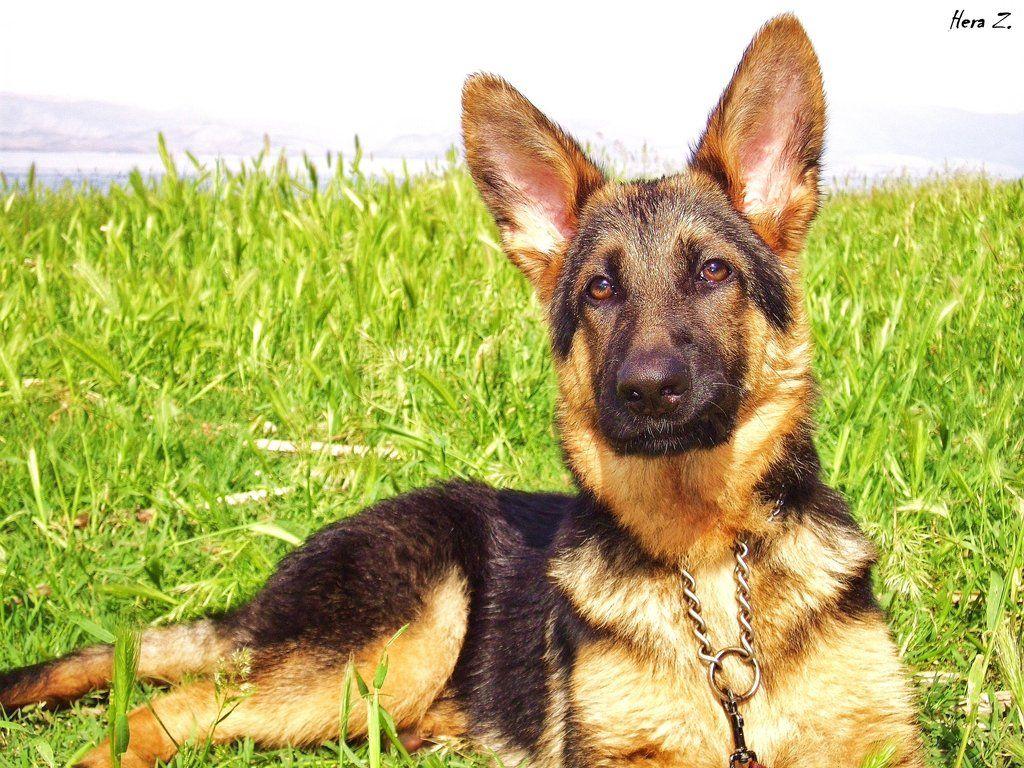 Park Art My WordPress Blog_Rottweiler Puppies For Sale In East Texas