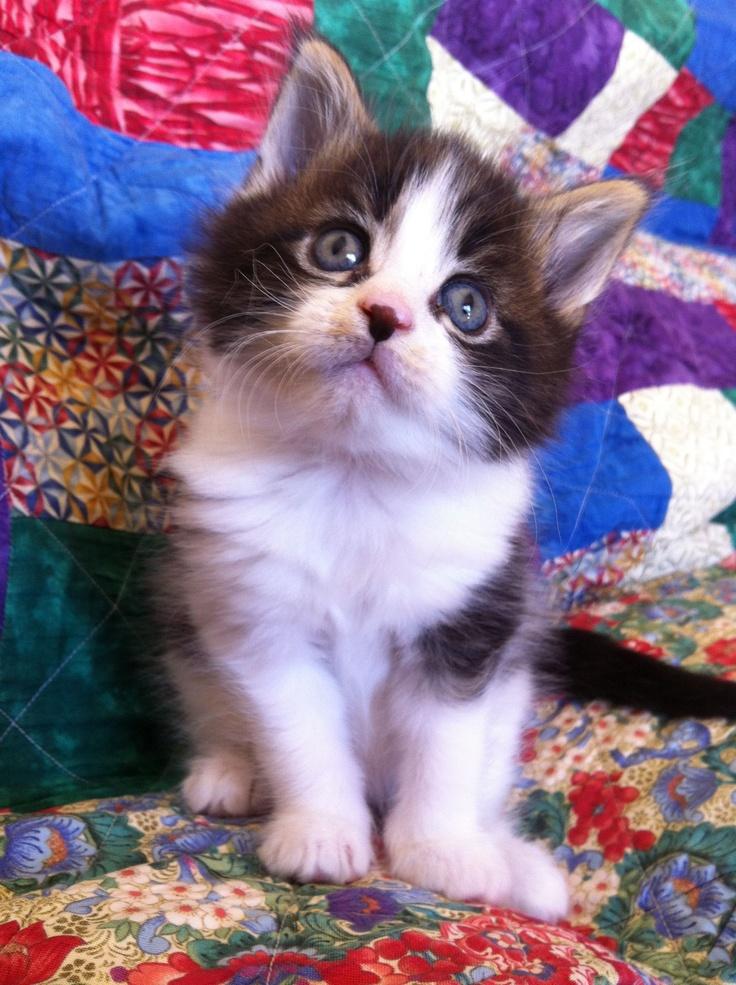 Park Art|My WordPress Blog_Maine Coon Kittens For Sale In Manhattan Beach