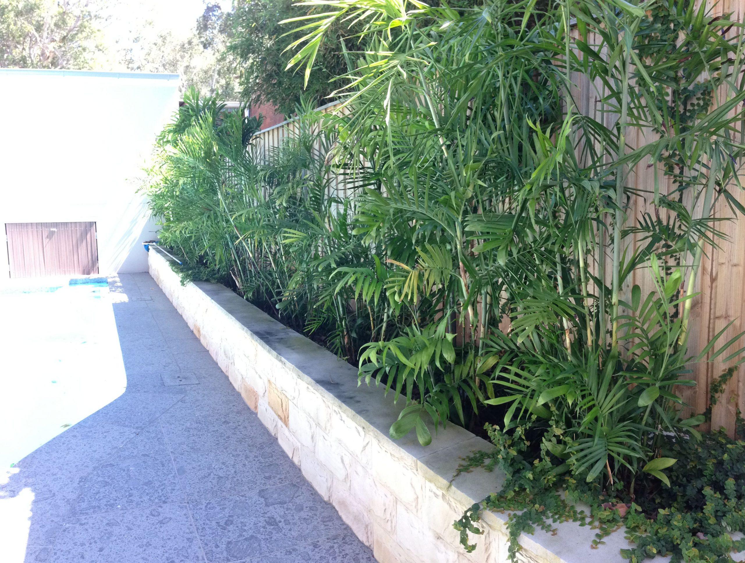 Park Art|My WordPress Blog_Bamboo Garden Menu 29 Palms
