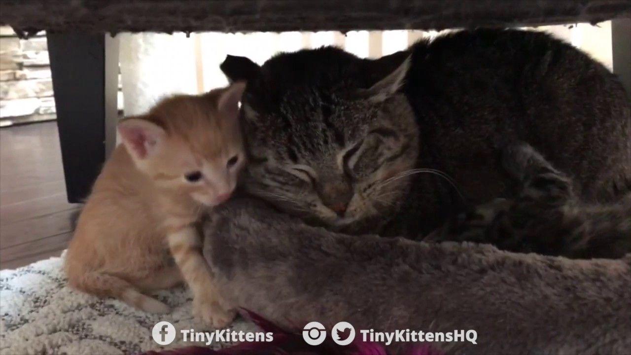 Park Art|My WordPress Blog_Kidney Disease In Cats When To Euthanize Uk