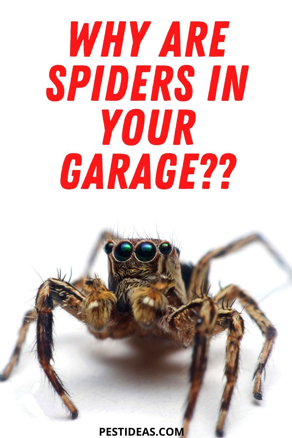 Park Art|My WordPress Blog_How To Keep Spider Webs Out Of Garage