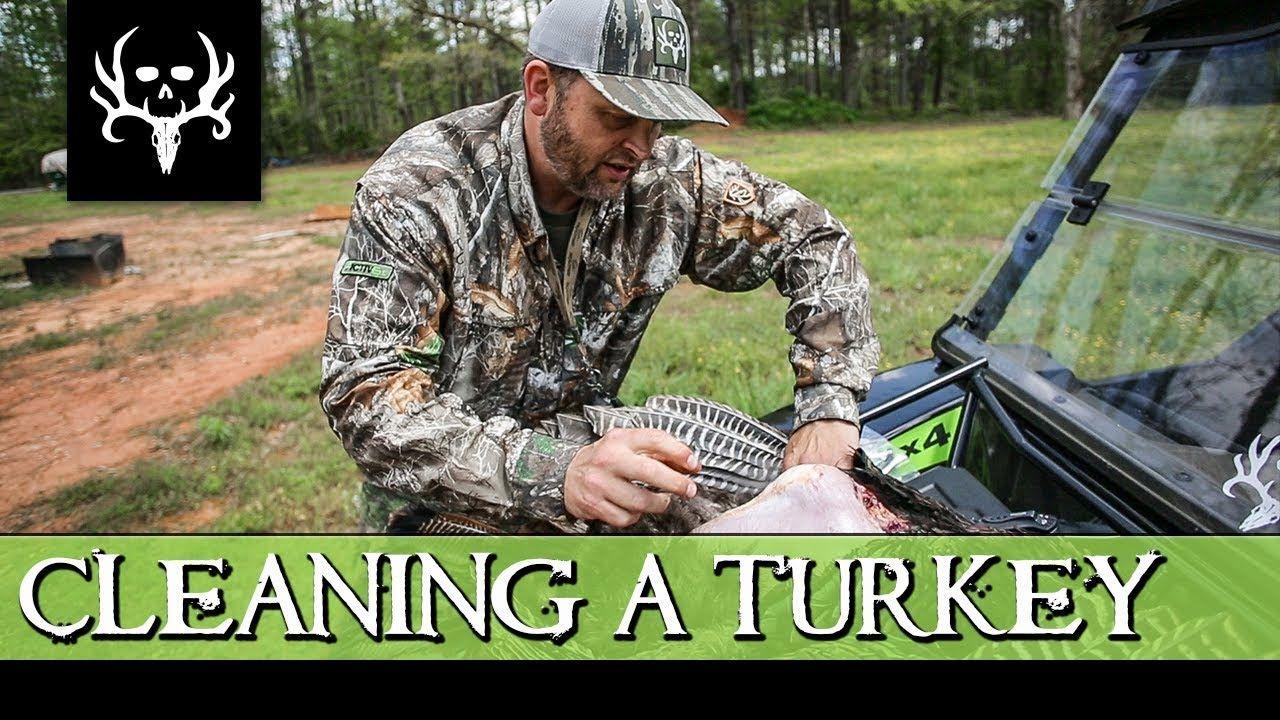 Park Art|My WordPress Blog_How To Clean A Wild Turkey Fan