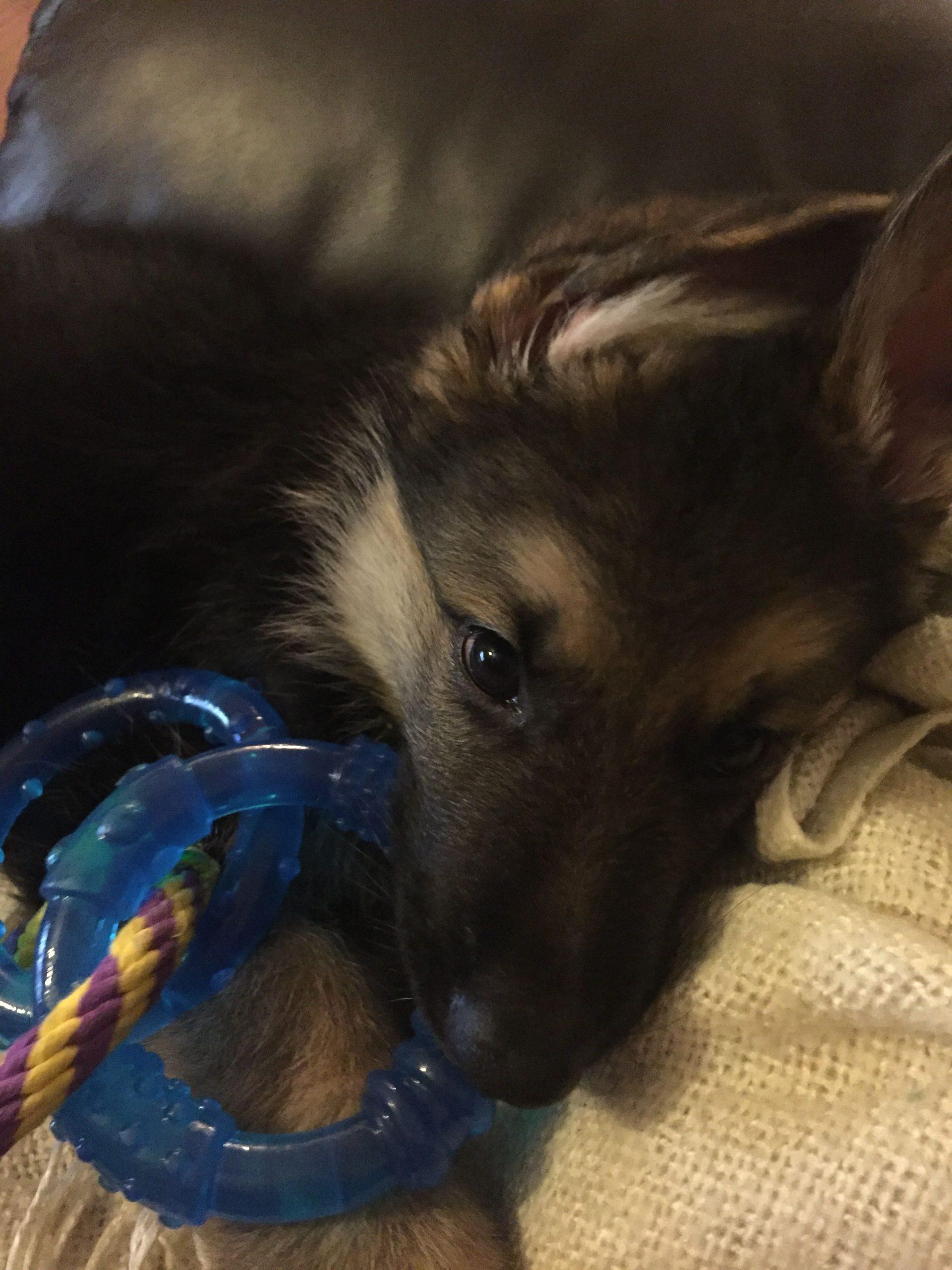 Park Art|My WordPress Blog_Newly Born German Shepherd Puppies