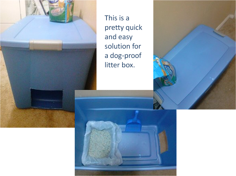 Park Art|My WordPress Blog_How To Make A Dog Proof Cat Litter Box