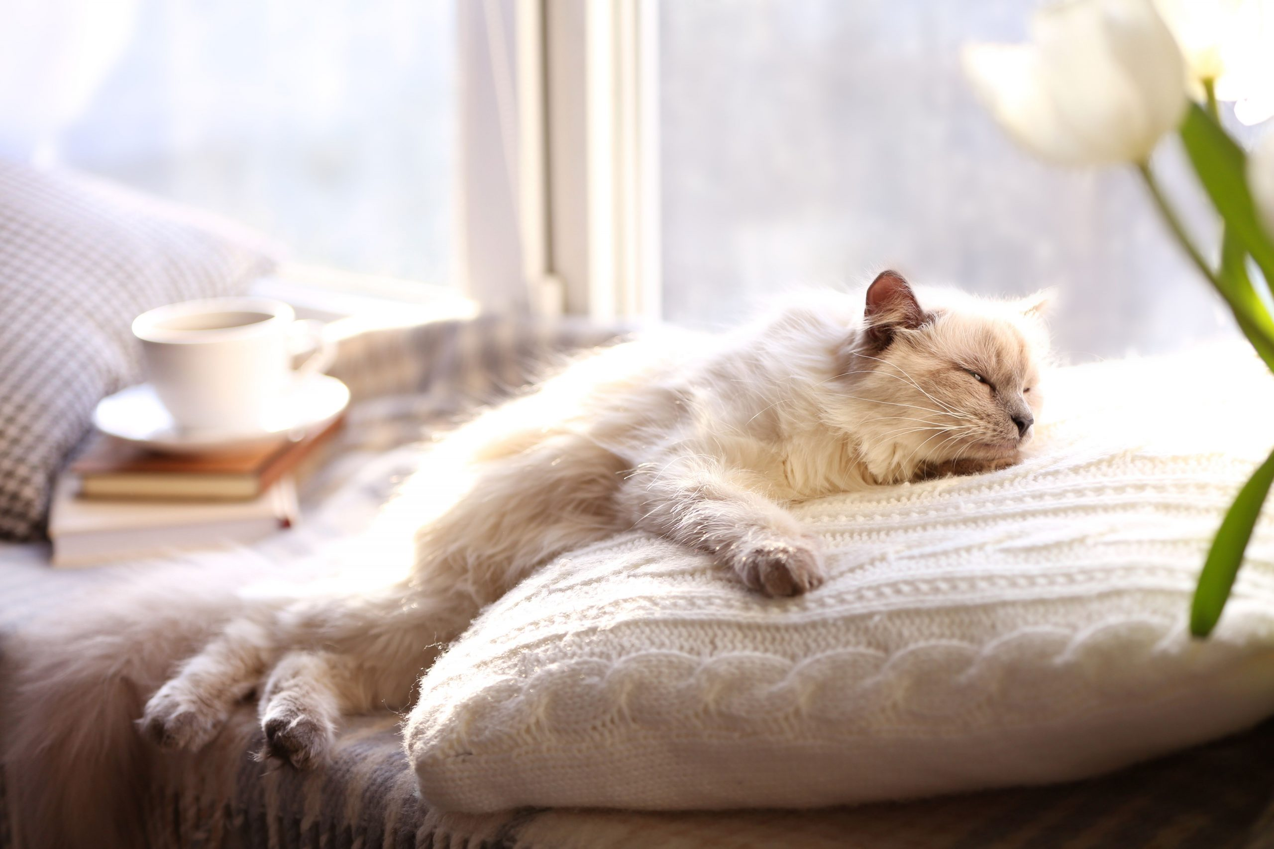 Park Art|My WordPress Blog_Why Cat Sleep On My Head