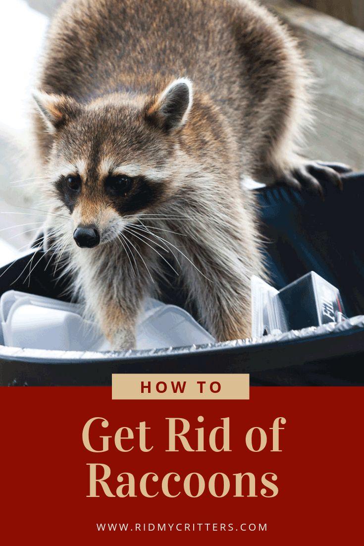 Park Art|My WordPress Blog_How To Get Rid Of Raccoons On My Deck