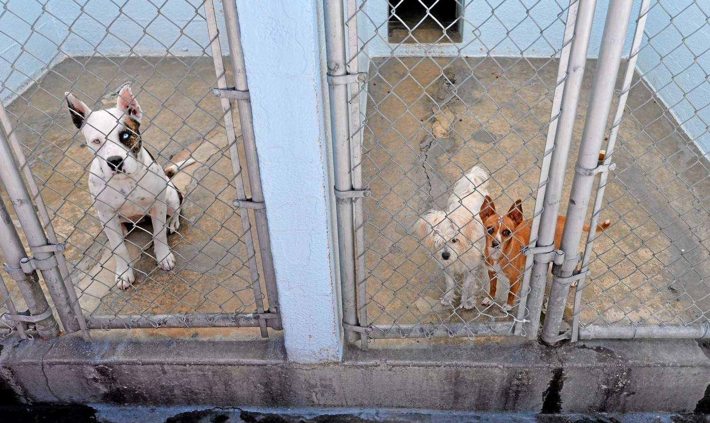 Park Art|My WordPress Blog_Shays Strays Animal Rescue Carson Ca