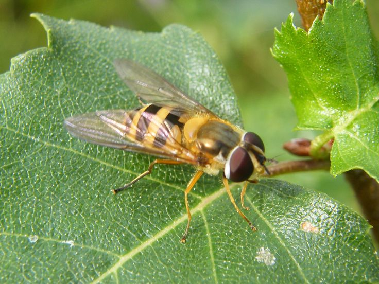 Park Art My WordPress Blog_How To Get Rid Of Hoverfly Nests