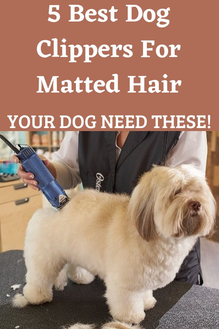 Park Art My WordPress Blog_Dog Clippers For Thick Matted Hair