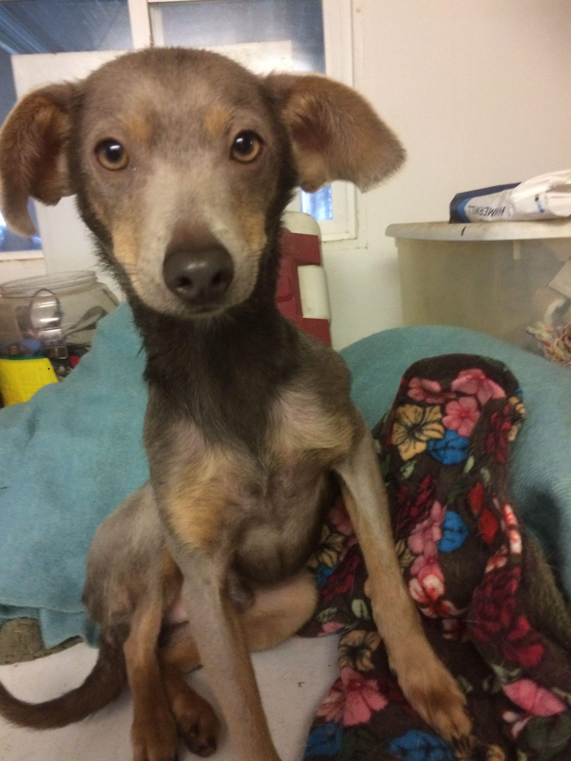Park Art My WordPress Blog_Doberman Puppies For Adoption In Florida