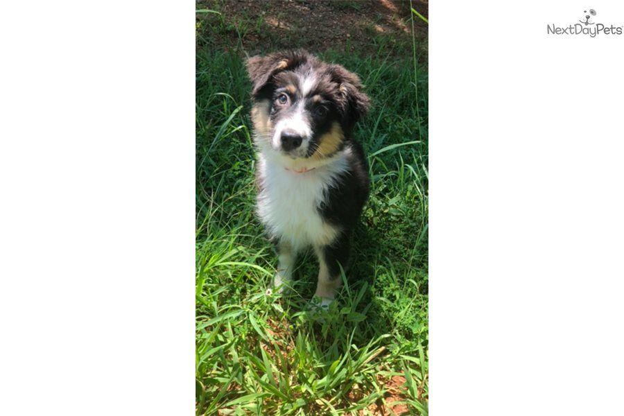 Park Art My WordPress Blog_Corgi Puppies For Sale In Fredericksburg Va