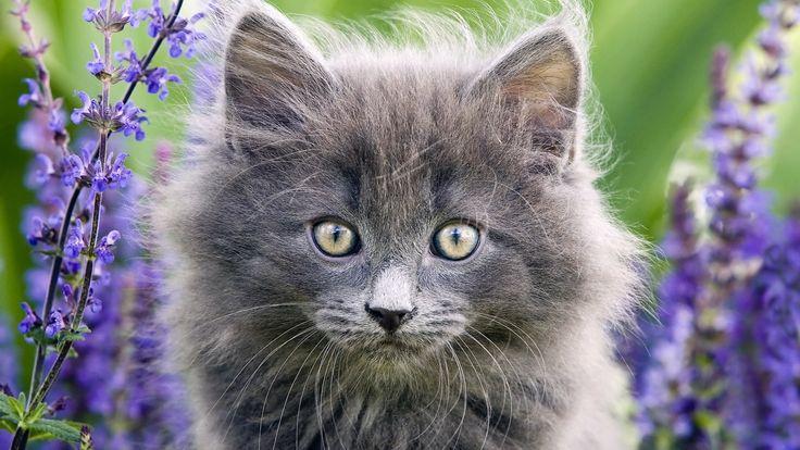Park Art|My WordPress Blog_Norwegian Forest Cat Breeders Oregon