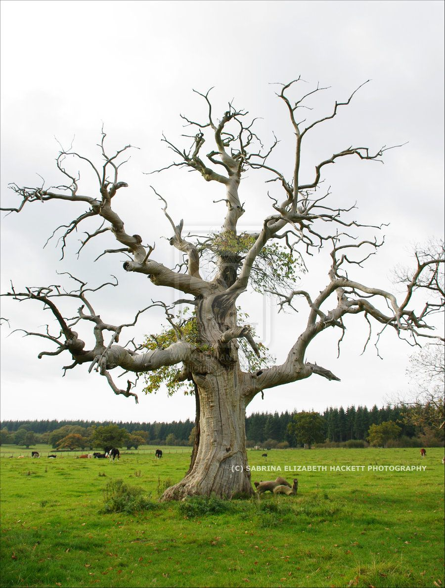 Park Art|My WordPress Blog_How To Tell If A Tree Is Dead Uk