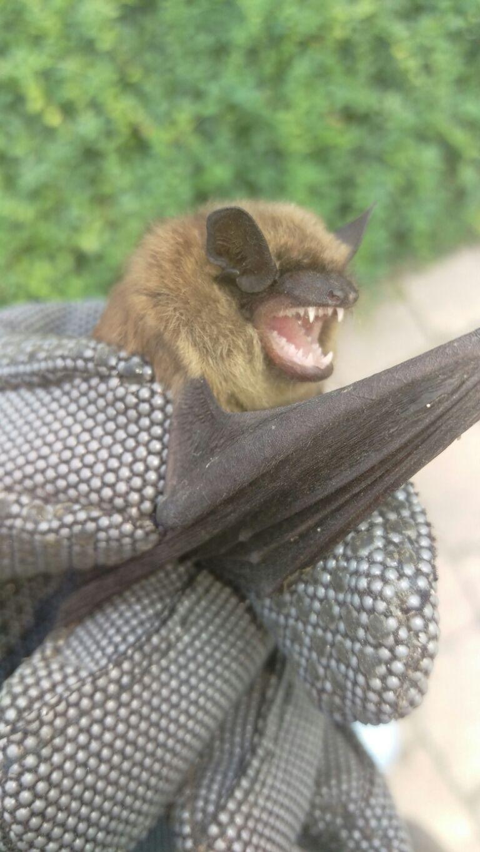 Park Art|My WordPress Blog_What Do Bats Sound Like In Your Loft
