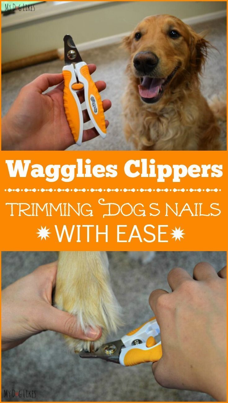 Park Art|My WordPress Blog_How To Cut An Uncooperative Dogs Nails At Home