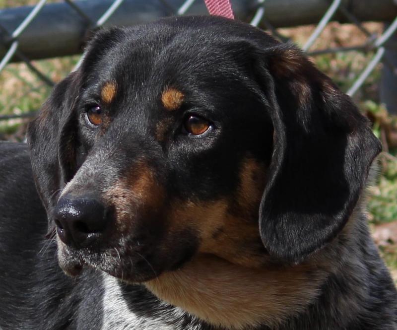 Park Art|My WordPress Blog_Roane County Animal Shelter Facebook