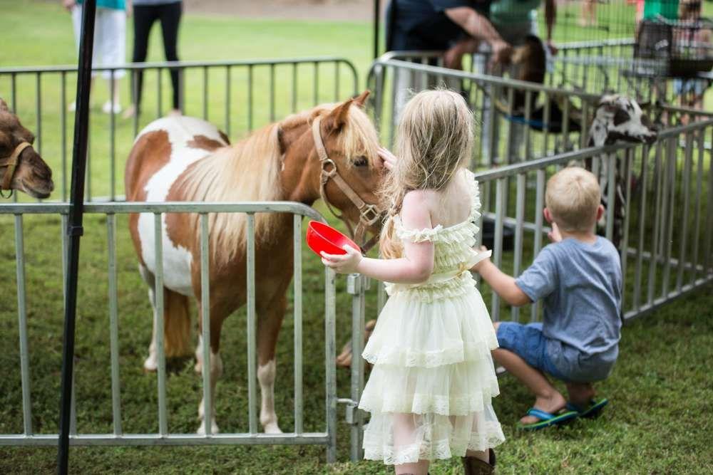 Park Art|My WordPress Blog_Pony Rides Birthday Party Charlotte Nc