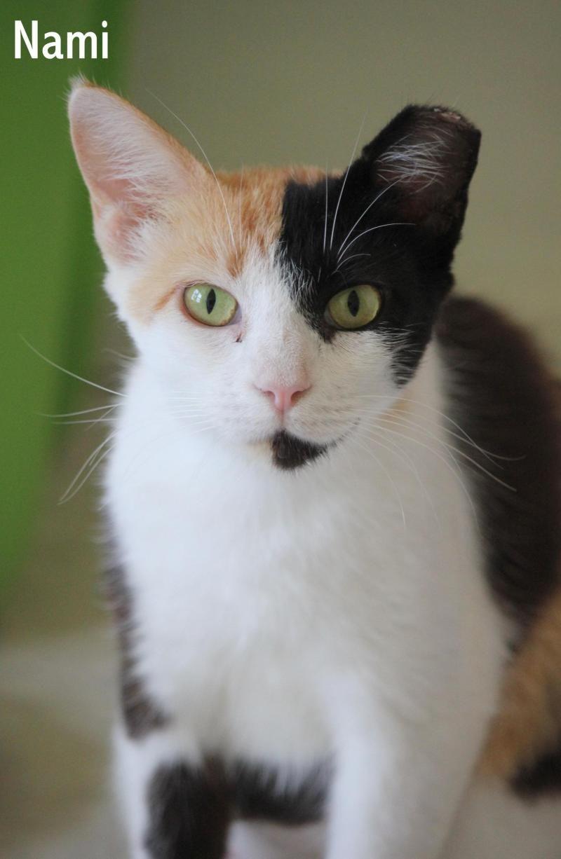 Park Art|My WordPress Blog_American Shorthair Kittens For Sale Georgia