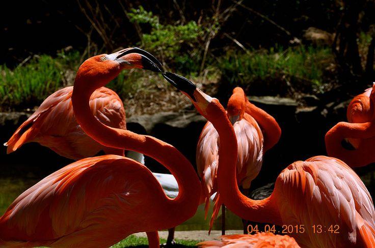 Park Art|My WordPress Blog_Flamingo A Friend Birmingham Al